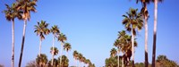 """Low angle view of palm trees, Fort De Soto Par, Gulf Coast, Florida, USA by Panoramic Images - 32"""" x 12"""", FulcrumGallery.com brand"""