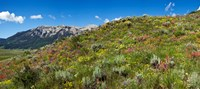 """Flowers and whetstone on hillside, Mt Vista, Colorado, USA by Panoramic Images - 27"""" x 12"""""""