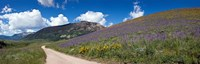 """Brush Creek Road and hillside of sunflowers and purple larkspur flowers, Colorado, USA by Panoramic Images - 38"""" x 12"""""""