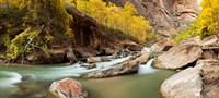 Cottonwood trees and rocks along Virgin River, Zion National Park, Springdale, Utah, USA Fine Art Print