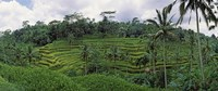 "Terraced rice field, Bali, Indonesia by Panoramic Images - 29"" x 12"""