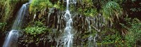 Waterfall in a forest, Hawaii, USA by Panoramic Images - various sizes