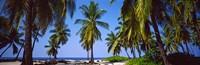 """Palm trees on the beach, Puuhonua O Honaunau National Historical Park, Hawaii, USA by Panoramic Images - 37"""" x 12"""""""