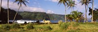 "Horse and palm trees on the coast, Hawaii, USA by Panoramic Images - 36"" x 12"""