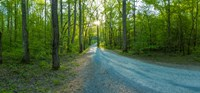 "Dirt road passing through a forest, Great Smoky Mountains National Park, Blount County, Tennessee, USA by Panoramic Images - 26"" x 12"" - $34.99"
