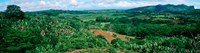 "Trees on a hill, Chamarel, Mauritius Island, Mauritius by Panoramic Images - 46"" x 12"" - $34.99"