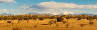 High desert plains landscape with snowcapped Sangre de Cristo Mountains in the background, New Mexico Fine Art Print