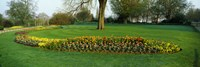 Tulips in Hyde Park, City of Westminster, London, England by Panoramic Images - various sizes