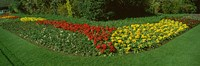 """Flowers in St. James's Park, City of Westminster, London, England by Panoramic Images - 36"""" x 12"""""""