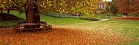 "Autumn Leaves in a Park, Christchurch, South Island, New Zealand by Panoramic Images - 36"" x 12"", FulcrumGallery.com brand"