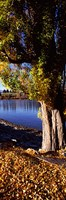 "Banks of Lake Wakatipu, Queenstown, South Island, New Zealand by Panoramic Images - 12"" x 36"", FulcrumGallery.com brand"