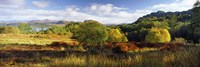 Autumn Rrees at Loch Carron, Scotland by Panoramic Images - various sizes