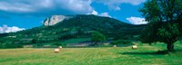 "Tree in a field, Mevouillon, Provence-Alpes-Cote d'Azur, France by Panoramic Images - 33"" x 12"" - $34.99"