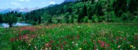"""Wildflowers in a field at lakeside, French Riviera, France by Panoramic Images - 33"""" x 12"""""""