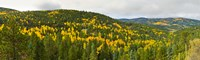 """Aspen hillside in autumn, Sangre De Cristo Mountains, Angel Fire, New Mexico, USA by Panoramic Images - 40"""" x 12"""""""