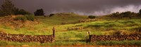Stone wall in a field, Kula, Maui, Hawaii, USA Fine Art Print