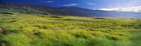 "Grassland, Kula, Maui, Hawaii, USA by Panoramic Images - 36"" x 12"""