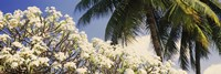 Low angle view of trees, Hawaii, USA by Panoramic Images - various sizes