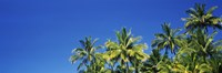 "Palm Trees, Maui, Hawaii (low angle view) by Panoramic Images - 36"" x 12"", FulcrumGallery.com brand"