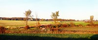 "Amish farmer plowing a field, USA by Panoramic Images - 29"" x 12"""