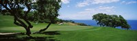 """Trees on a golf course, The Manele Golf course, Lanai City, Hawaii, USA by Panoramic Images - 40"""" x 12"""""""