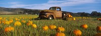 """Old Rusty Truck in Pumpkin Patch, Half Moon Bay, California, USA by Panoramic Images - 33"""" x 12"""""""