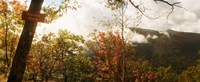 """Trees with Sunset Rock sign, Kaaterskill Falls area, Catskill Mountains, New York State, USA by Panoramic Images - 29"""" x 12"""""""