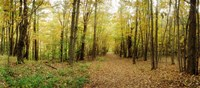 """Trail through the forest of the Catskills in Kaaterskill Falls, New York State by Panoramic Images - 27"""" x 12"""""""