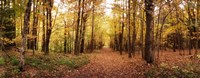 """Trail through the forest of the Catskills in Kaaterskill Falls in Autumn, New York State, USA by Panoramic Images - 31"""" x 12"""""""