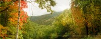 """Trees on mountain during autumn, Kaaterskill Falls area, Catskill Mountains, New York State by Panoramic Images - 30"""" x 12"""""""