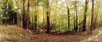 """Forest, Kaaterskill Falls area, Catskill Mountains, New York State by Panoramic Images - 29"""" x 12"""""""