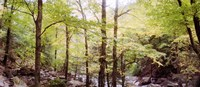 """Forest, Kaaterskill Falls, Catskill Mountains, New York State, USA by Panoramic Images - 28"""" x 12"""""""