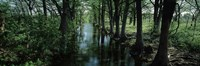 """Trees along Blanco River, Texas, USA by Panoramic Images - 37"""" x 12"""""""