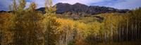 "Trees in autumn, Colorado by Panoramic Images - 37"" x 12"""