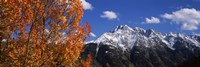 "Autumn Trees and snowcapped mountains, Colorado by Panoramic Images - 36"" x 12"", FulcrumGallery.com brand"