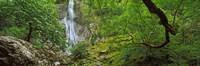 """Aber Falls in a forest, Abergwyngregyn, Gwynedd, Wales by Panoramic Images - 37"""" x 12"""" - $34.99"""