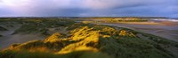 """Sand dunes on the beach, Newburgh, River Ythan, Aberdeenshire, Scotland by Panoramic Images - 36"""" x 12"""", FulcrumGallery.com brand"""