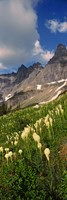 Beargrass with Mountains, Glacier National Park, Montana by Panoramic Images - various sizes