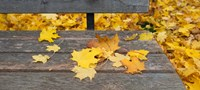 """Fallen leaves on a wooden bench, Baden-Wurttemberg, Germany by Panoramic Images - 26"""" x 12"""""""
