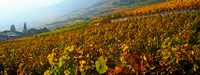 "Vineyards and village in autumn, Valais Canton, Switzerland by Panoramic Images - 32"" x 12"""