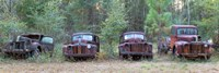 Old rusty cars and trucks on Route 319, Crawfordville, Wakulla County, Florida, USA Fine Art Print