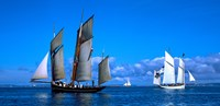 """Tall ship regatta featuring Cancalaise and Granvillaise, Baie De Douarnenez, Finistere, Brittany, France by Panoramic Images - 25"""" x 12"""""""
