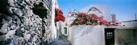 """Flowers on rooftop of a house, Santorini, Greece by Panoramic Images - 36"""" x 12"""", FulcrumGallery.com brand"""