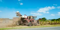 """Sugar Cane being harvested, Lower Daintree, Queensland, Australia by Panoramic Images - 24"""" x 12"""""""