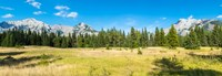 """Trees with mountain range in the background, Banff National Park, Alberta, Canada by Panoramic Images - 35"""" x 12"""""""