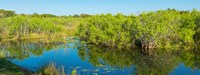 """Reflection of trees in a lake, Everglades National Park, Florida by Panoramic Images - 32"""" x 12"""" - $34.99"""