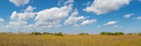 """Clouds over Everglades National Park, Florida, USA by Panoramic Images - 36"""" x 12"""", FulcrumGallery.com brand"""