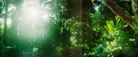 """Sunbeams shining through trees in a forest, Parque Lage, Jardim Botanico, Corcovado, Rio de Janeiro, Brazil by Panoramic Images - 29"""" x 12"""""""
