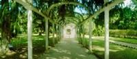 Pathway in a botanical garden, Jardim Botanico, Zona Sul, Rio de Janeiro, Brazil Fine Art Print