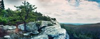 """Trees and boulders along the Gertrude's Nose, Minnewaska State Park, Catskill Mountains, New York State, USA by Panoramic Images - 30"""" x 12"""" - $34.99"""
